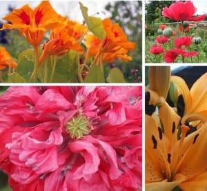august 29_potw_flowers