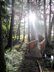 rogers bridge