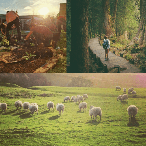 wellness images. sheep, big trees, gardening