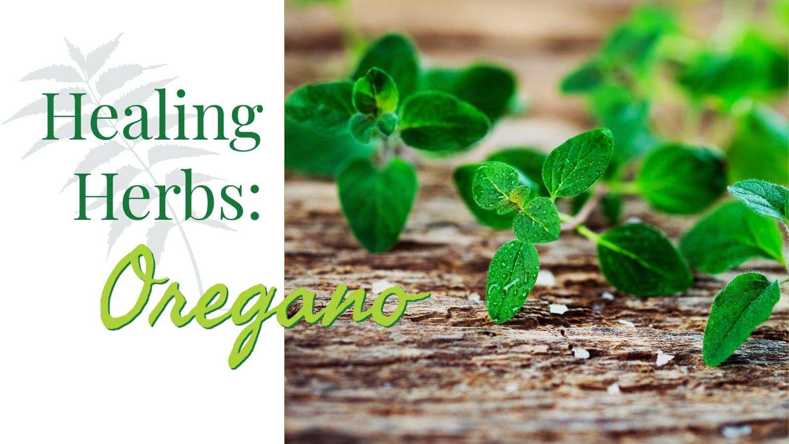 Healing Herbs: Oregano