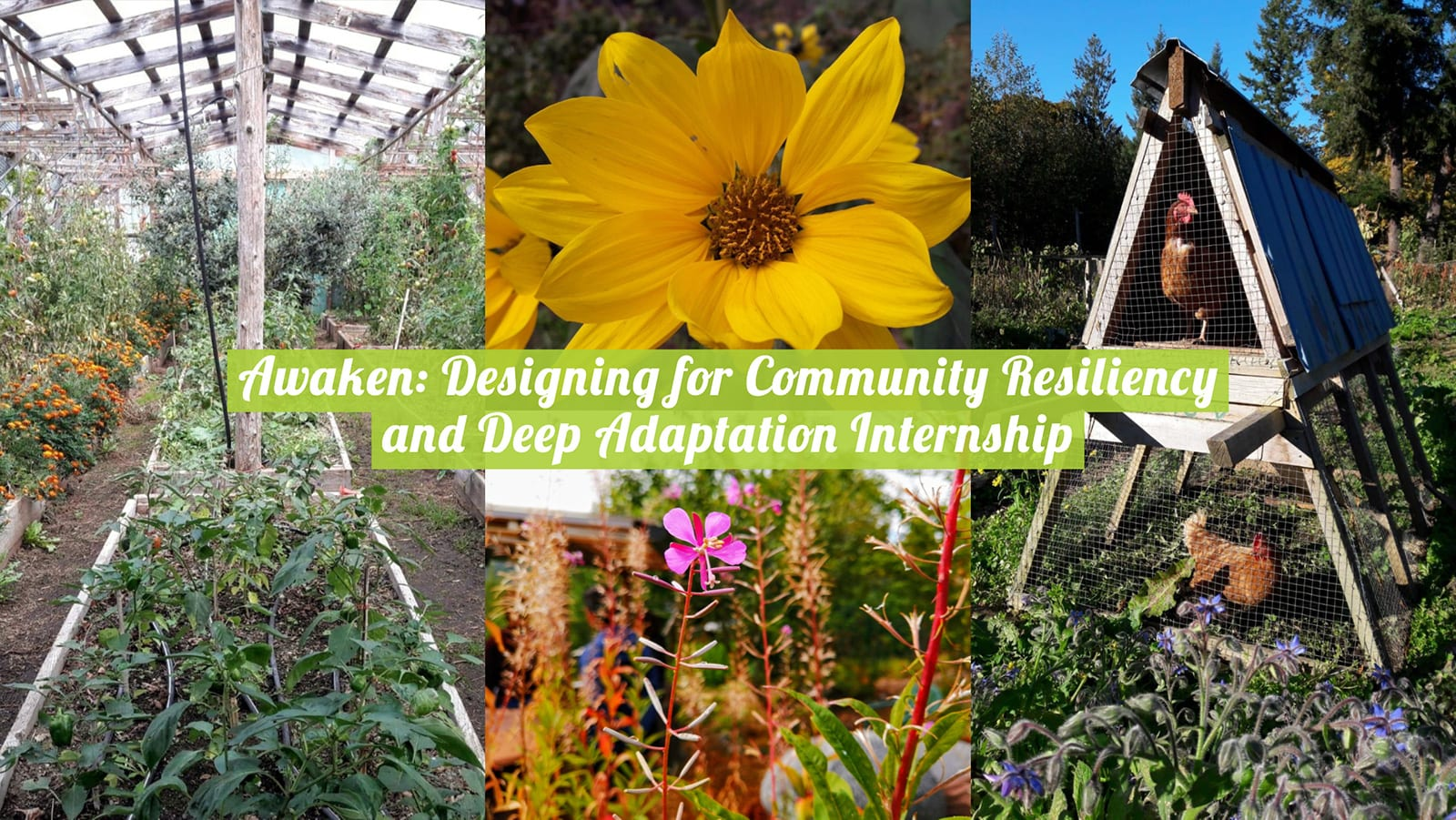Awaken: Designing for Community Resiliency and Deep Adaptation Internship Introduction