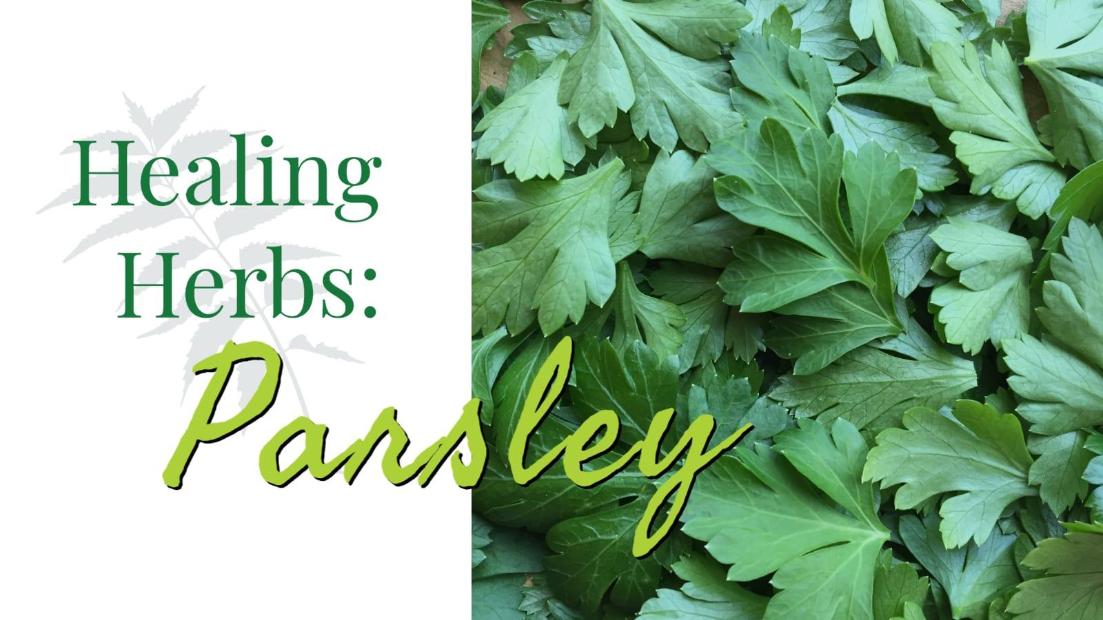 Healing Herbs: Parsley – CSA Week #12