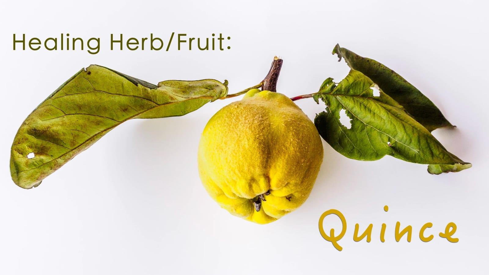 Healing Herbs: Quince – CSA Week 16