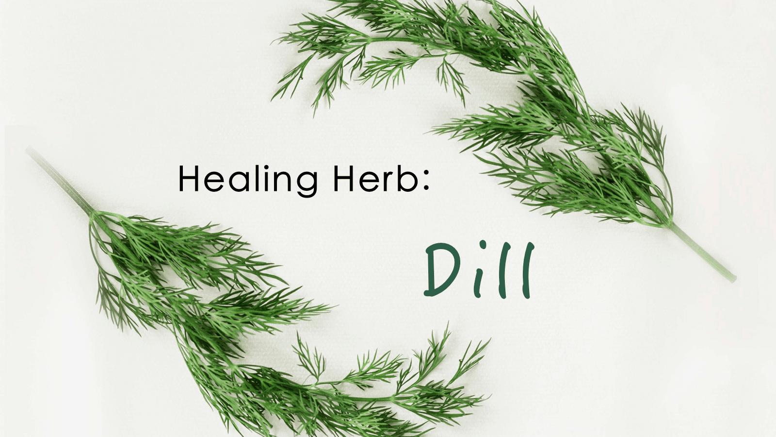 Healing Herbs: Dill – CSA Week #15