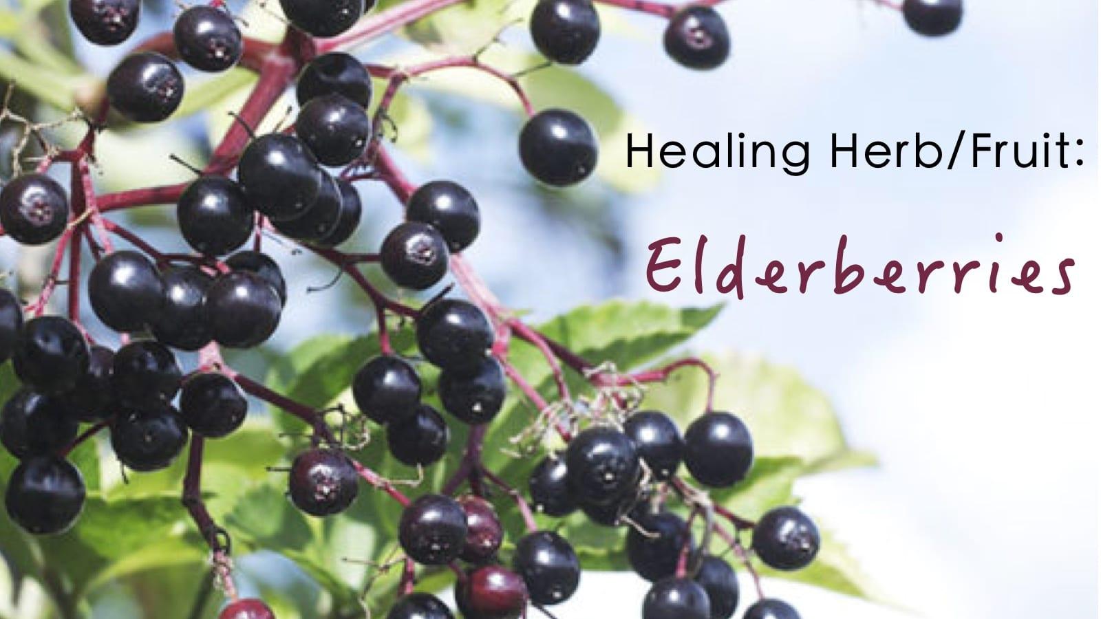 Healing Herbs/Fruits: Elderberries – OUR Educational CSA Week #17