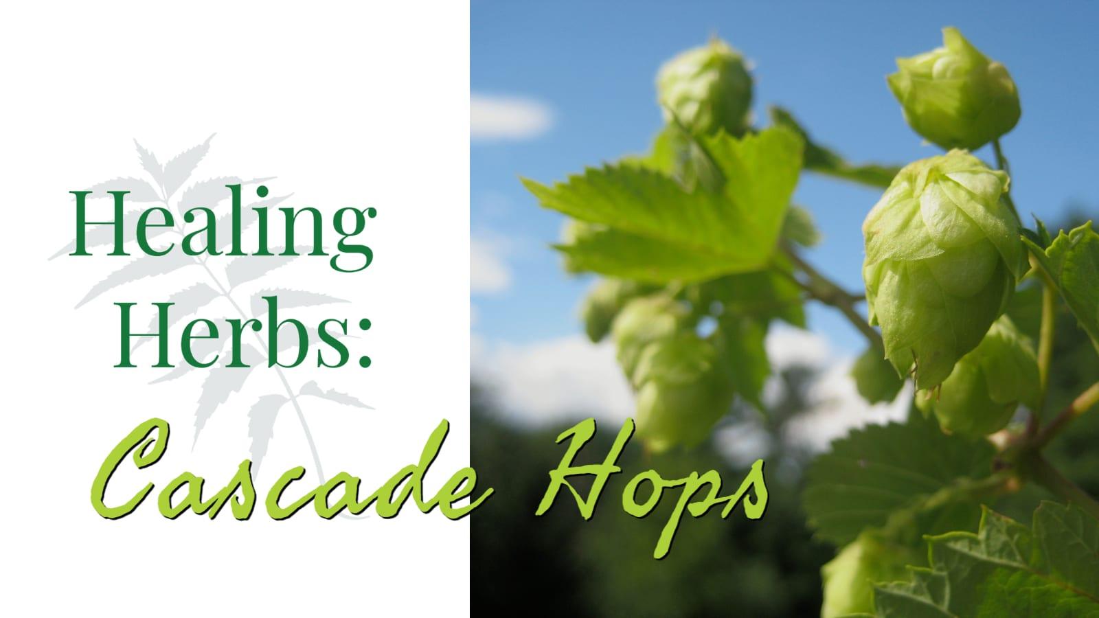 Healing Herbs: Cascade Hops – CSA Week #14