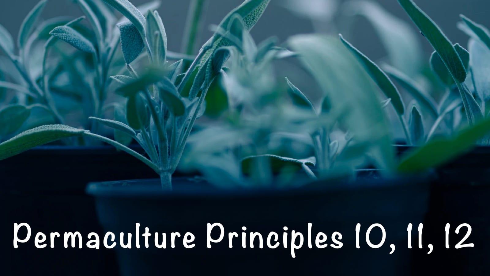 Permaculture Principles 10, 11, 12