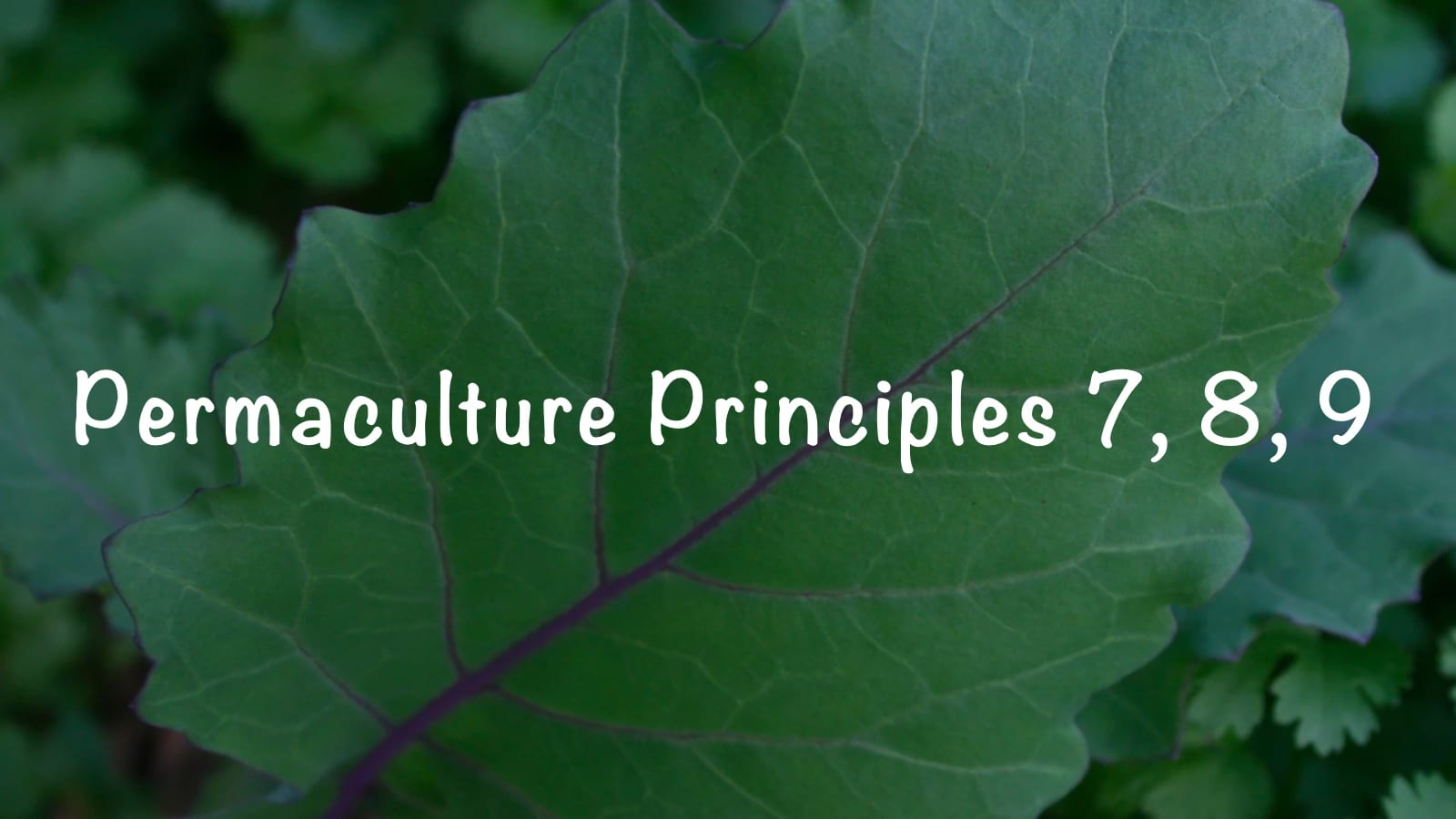Permaculture Principles – 7, 8, 9